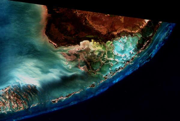 Calcium Communities: Florida Keys - related image preview