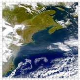SeaWiFS: Gulf Stream - selected image