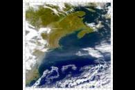 SeaWiFS: Gulf Stream
