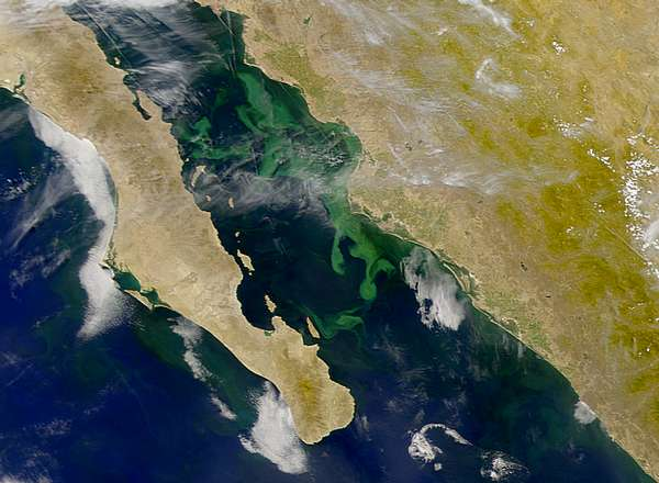 SeaWiFS: Phytoplankton Bloom in Gulf of California - related image preview