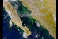 SeaWiFS: Phytoplankton Bloom in Gulf of California