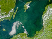 Phytoplankton bloom in the Baltic Sea - selected image