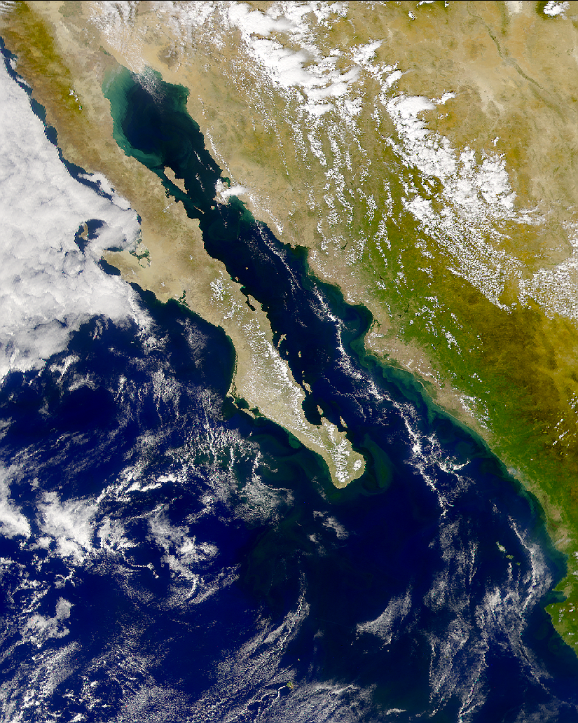 SeaWiFS: Phytoplankton Bloom in the Gulf of California - related image preview