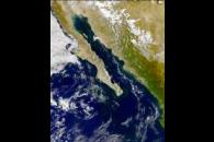 SeaWiFS: Phytoplankton Bloom in the Gulf of California