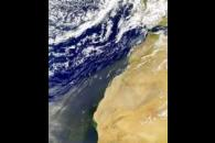 SeaWiFS: Northwest African Dust and Bloom