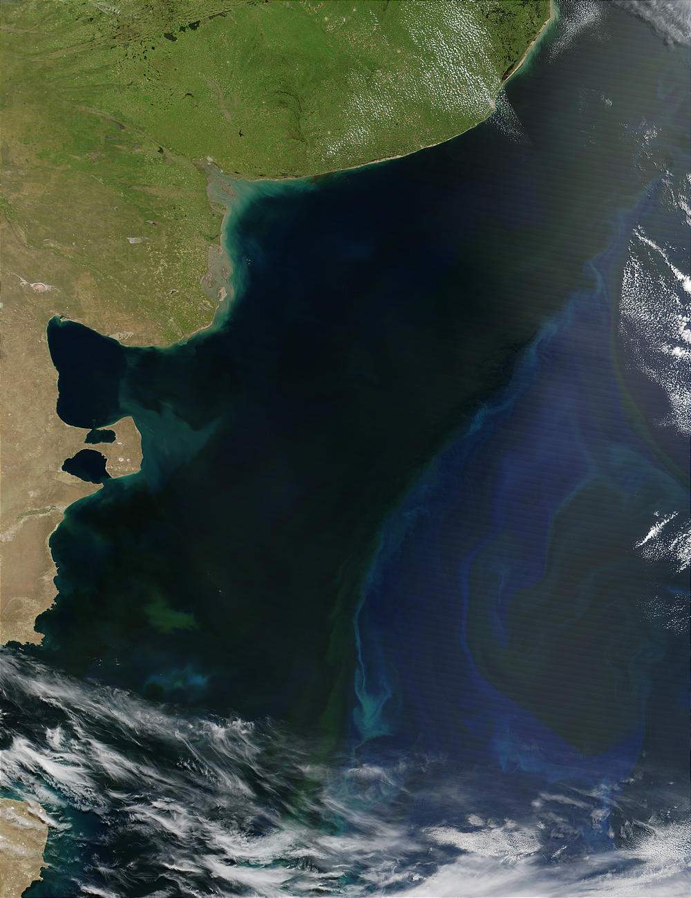 Phytoplankton bloom off the coast of Argentina - related image preview