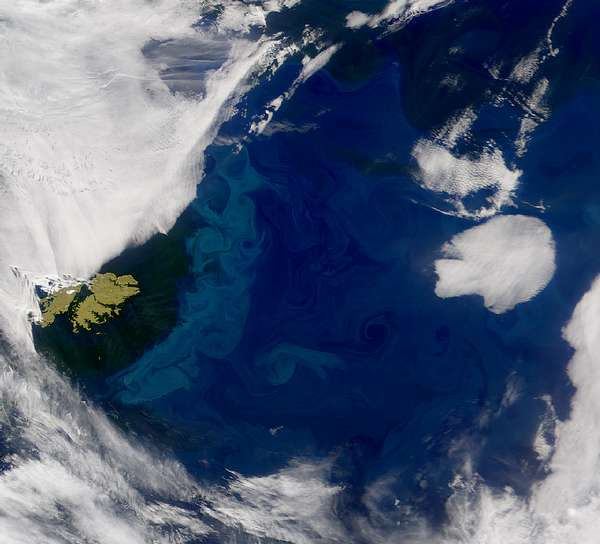 SeaWiFS: Falkland Islands - related image preview
