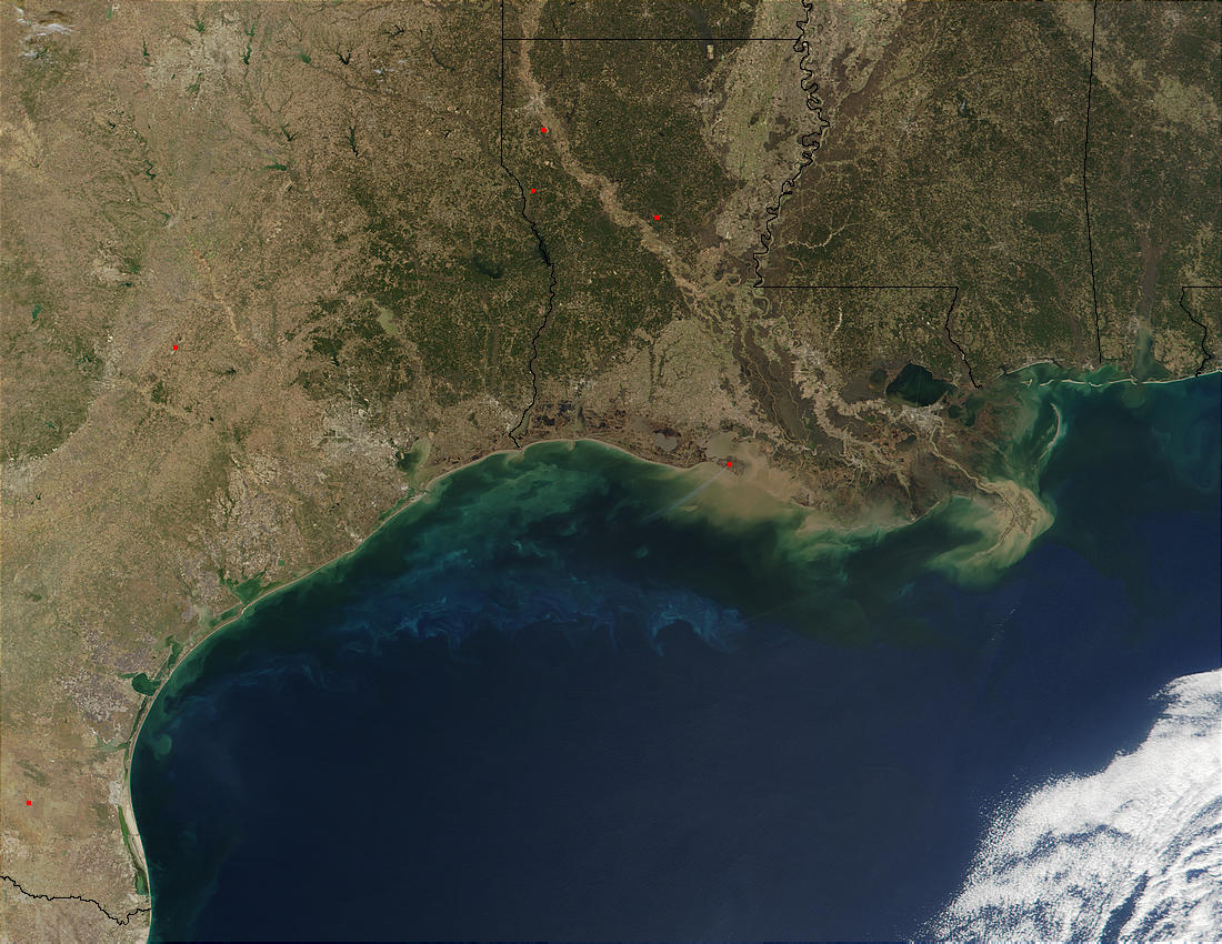 Phytoplankton and sediments in Gulf of Mexico - related image preview