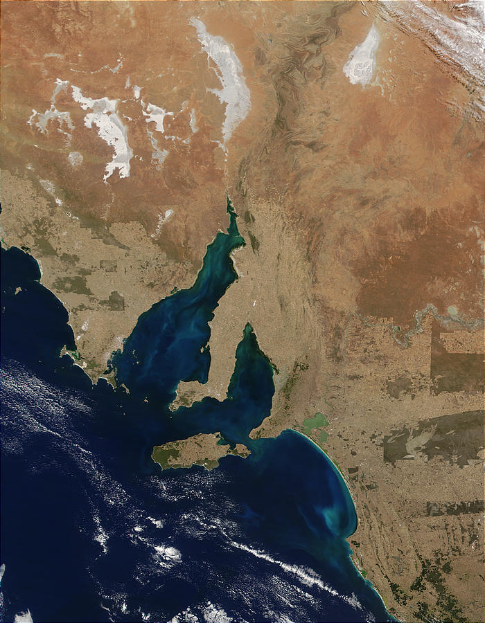 Phytoplankton bloom in Spencer Gulf, Gulf St. Vincent, and Lacepede Bay, South Australia - related image preview