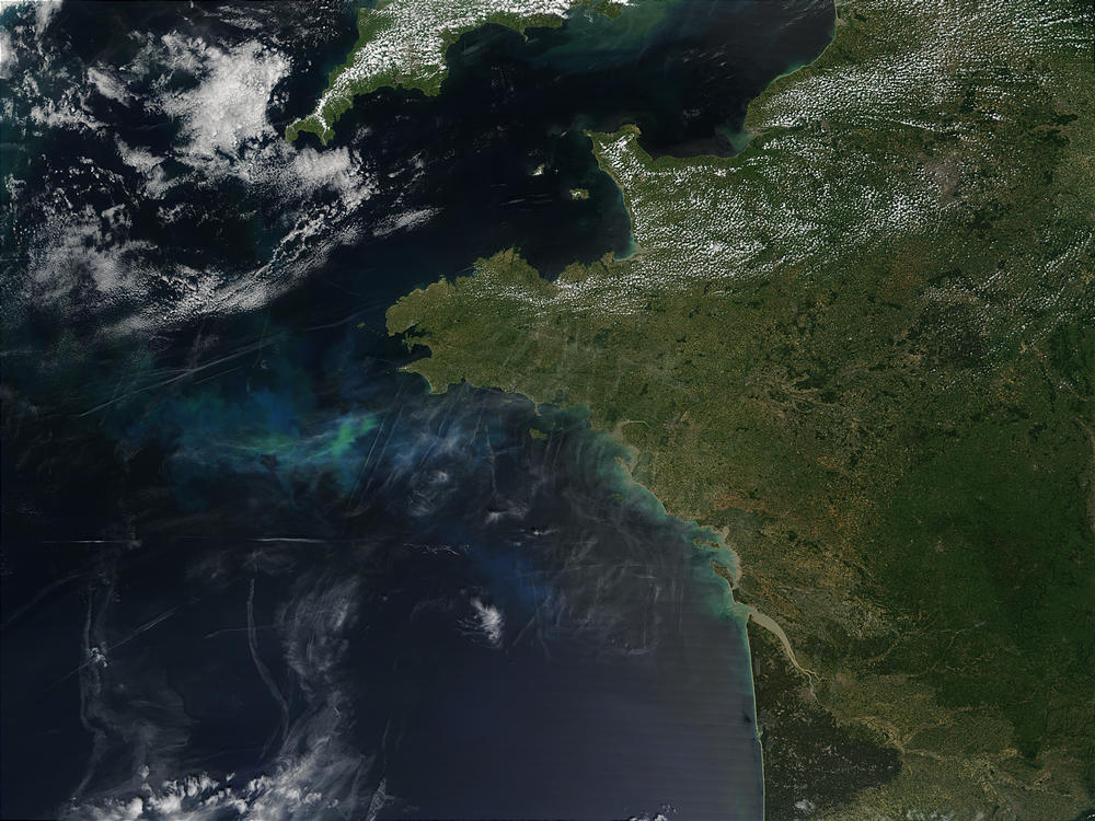 Phytoplankton bloom off Brittany, France - related image preview