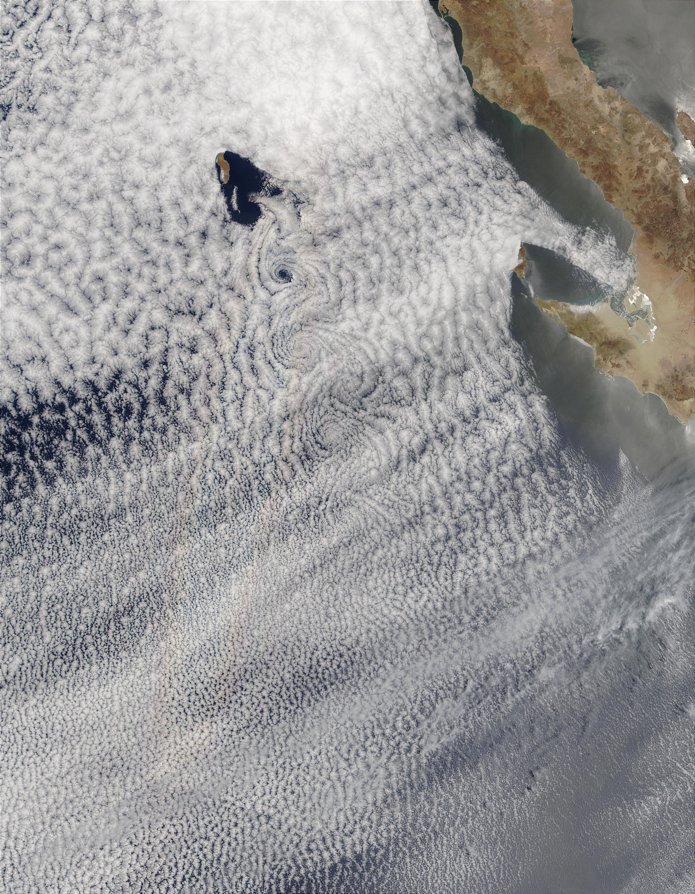 Vortex street and glory south of Guadalupe Island, Mexico - related image preview