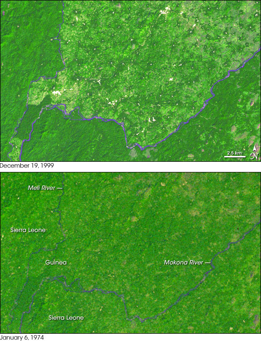 Deforestation in Guinea's Parrot's Beak Area