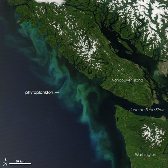 Phytoplankton Bloom off Vancouver Island