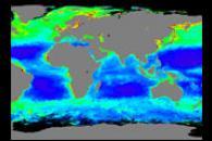 A World of Chlorophyll