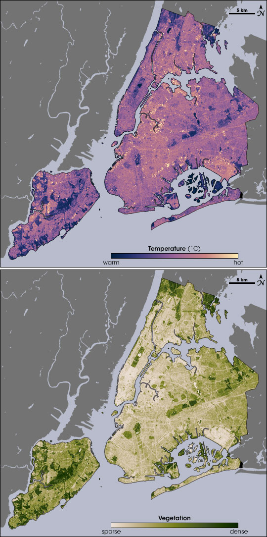 New York City Temperature and Vegetation - related image preview