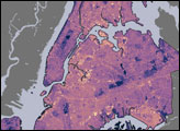 New York City Temperature and Vegetation