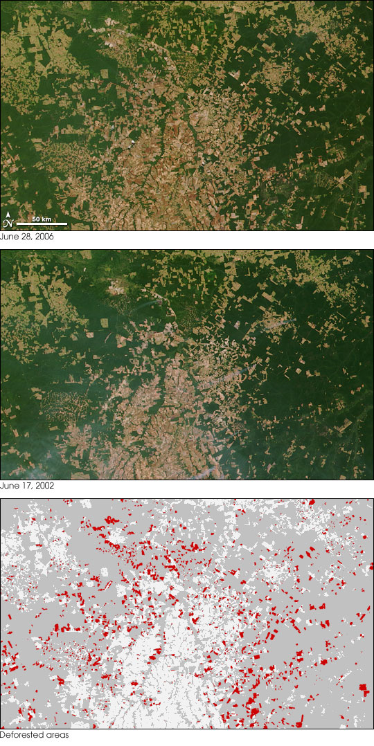 Amazon Deforestation, Mato Grosso, Brazil