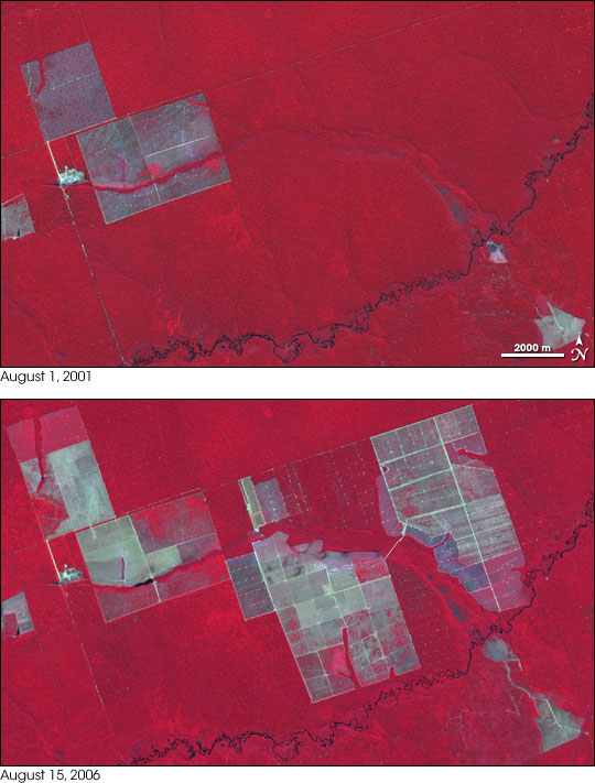 Expanding Deforestation in Mato Grosso, Brazil