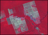 Expanding Deforestation in Mato Grosso, Brazil - selected image