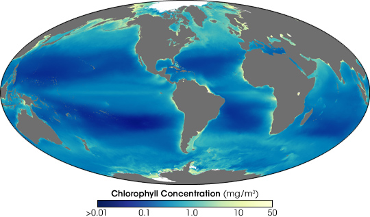 Nines Years of Ocean Chlorophyll