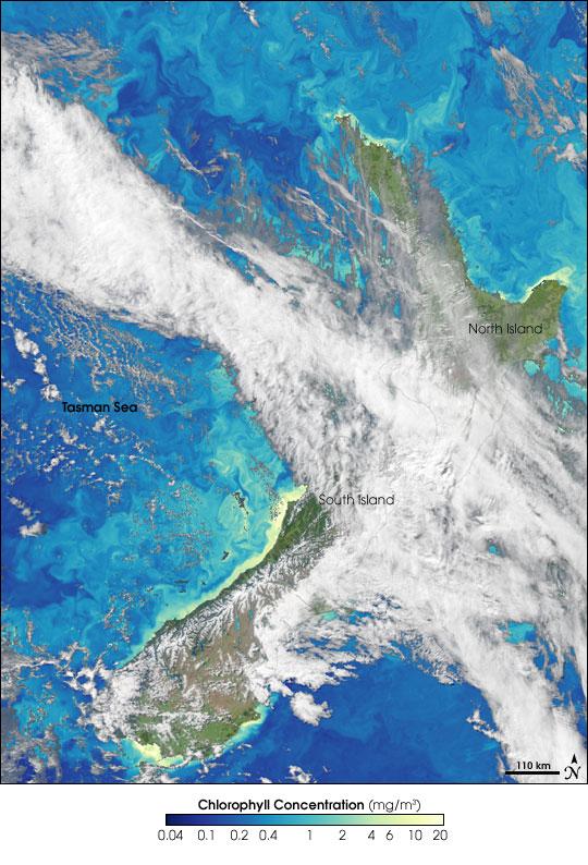 Chlorophyll Around New Zealand