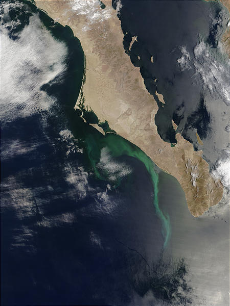 Phytoplankton bloom or sulfur plumes off Baja California - related image preview