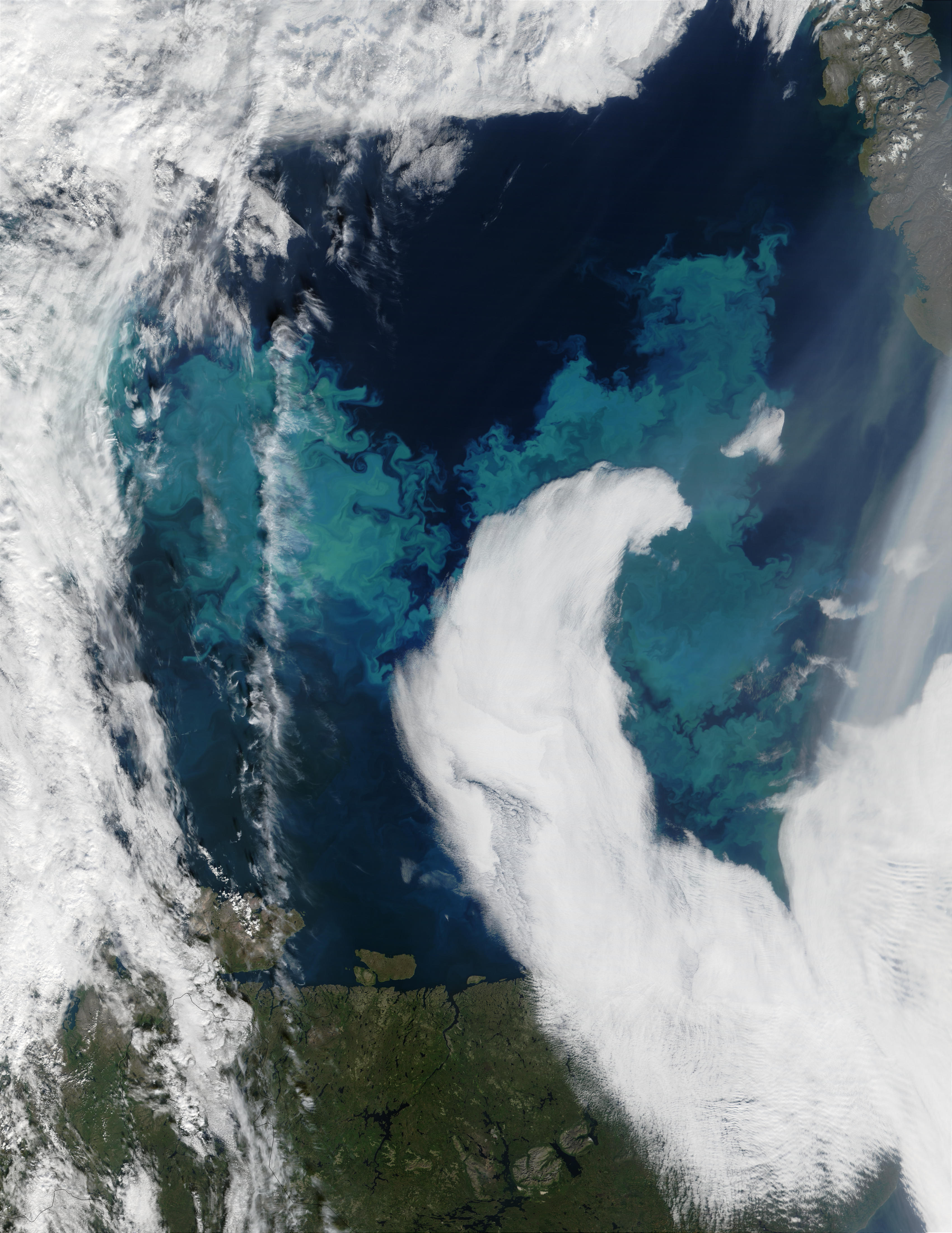 Coccolithophore bloom in the Barents Sea - related image preview