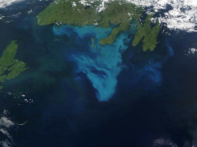 Phytoplankton bloom off Newfoundland, Canada - related image preview
