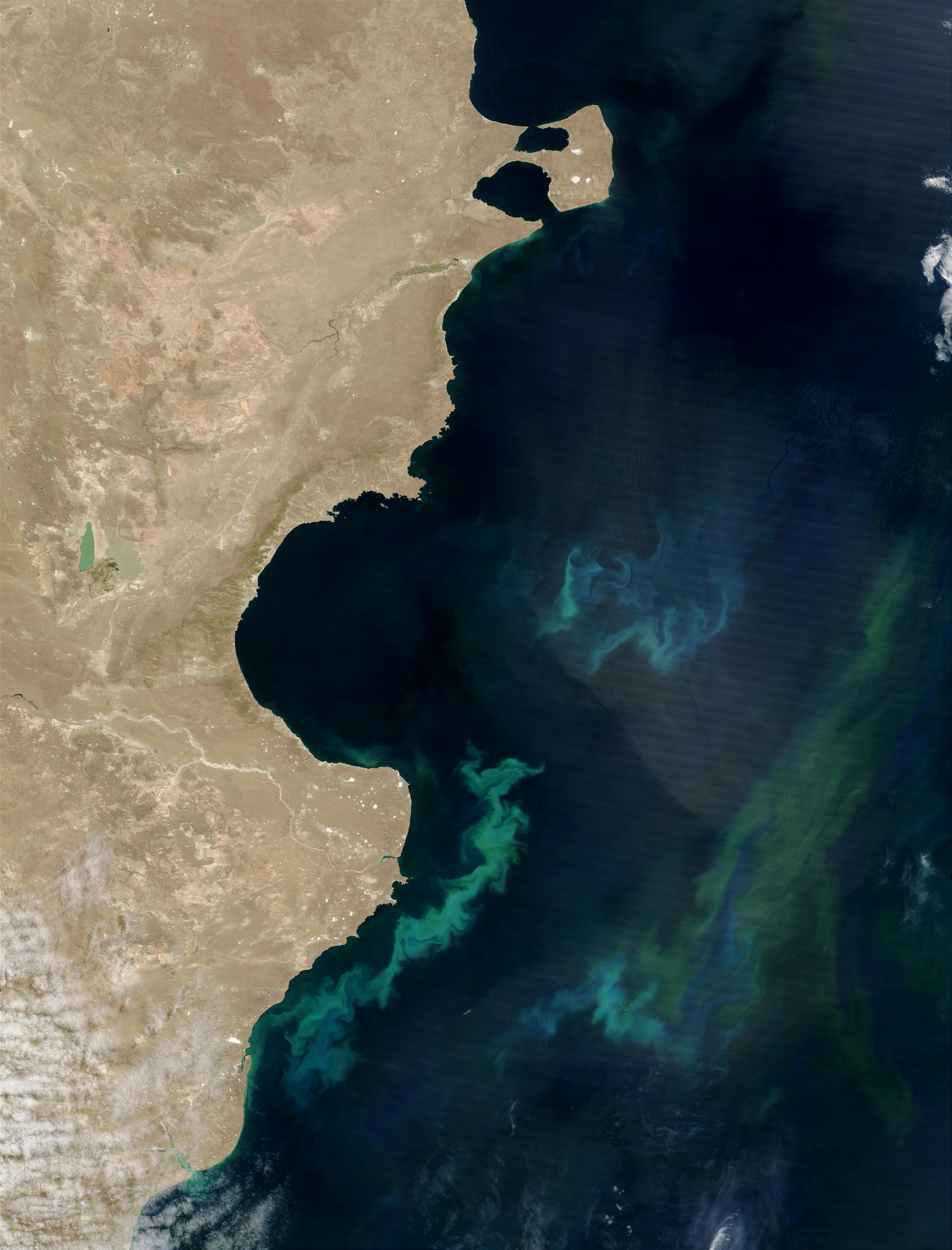 Phytoplankton bloom off Argentina - related image preview