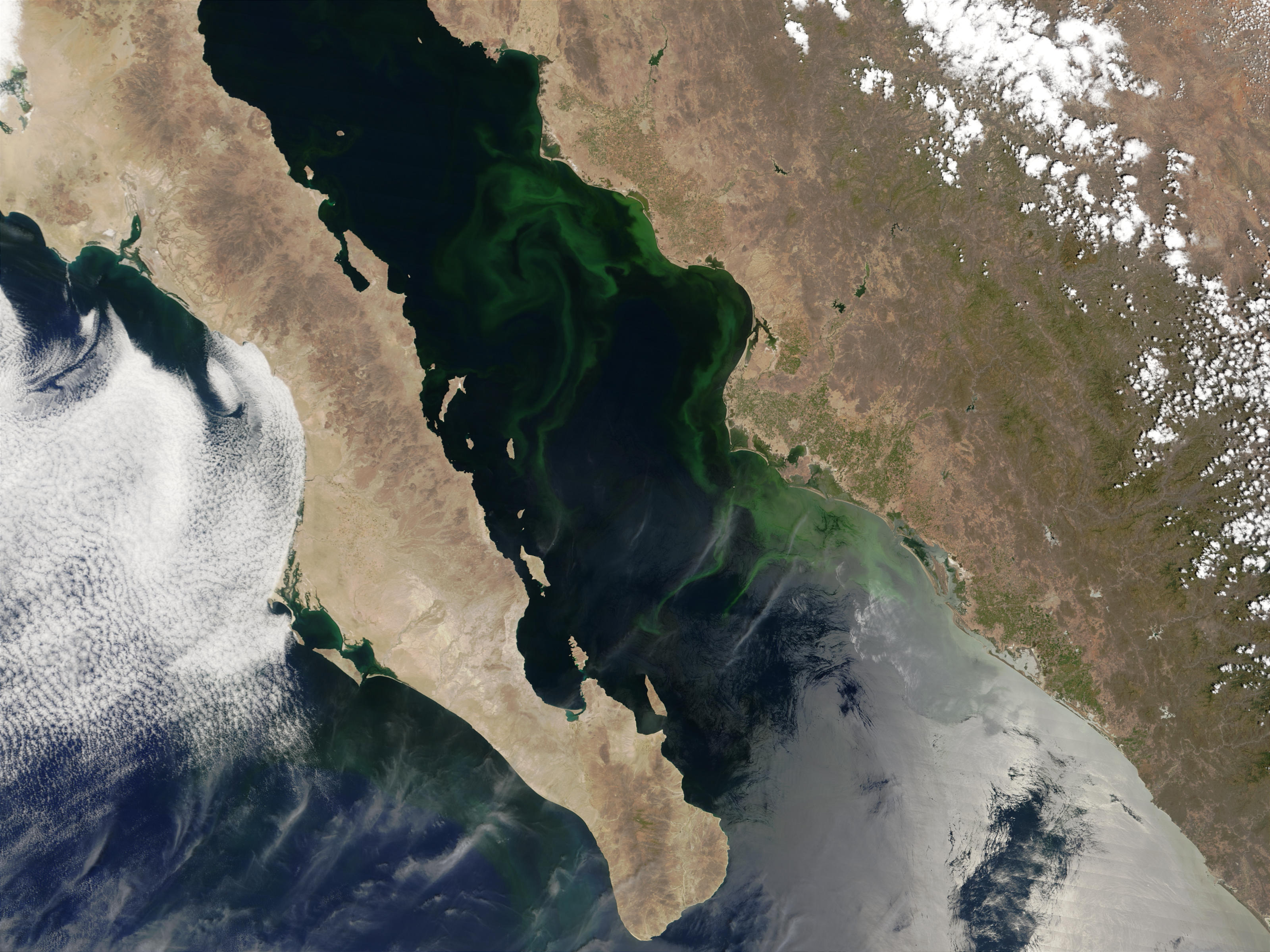 Nasa Visible Earth Phytoplankton Bloom In Gulf Of California Mexico
