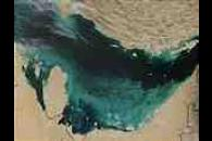 Phytoplankton bloom in southern Persian Gulf