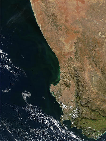 Phytoplankton bloom off South Africa - related image preview