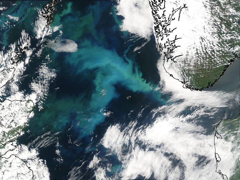 Phytoplankton bloom in the North Sea - related image preview
