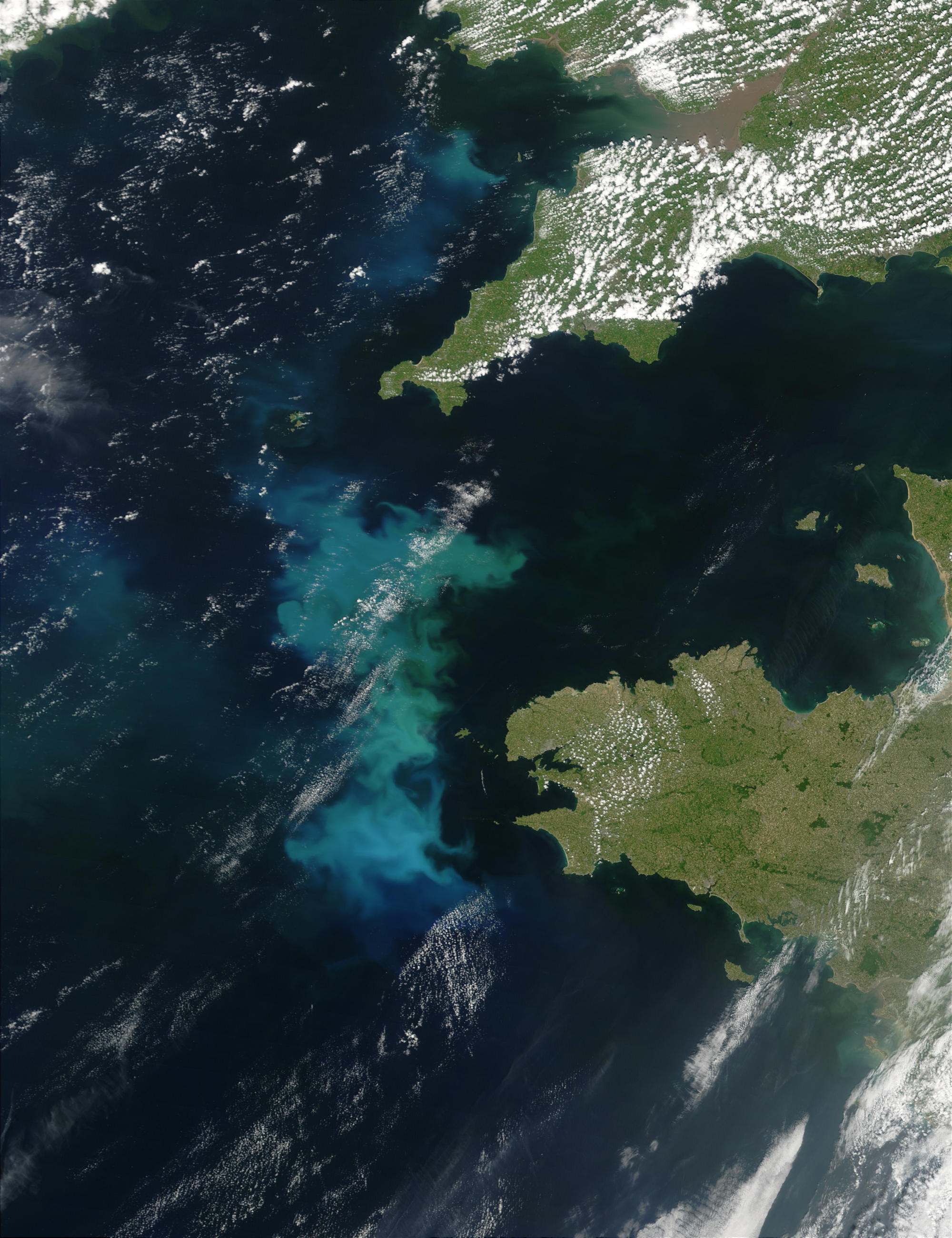 Phytoplankton bloom off France and England - related image preview