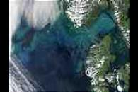 Phytoplankton bloom in the North Sea and the Skagerrak