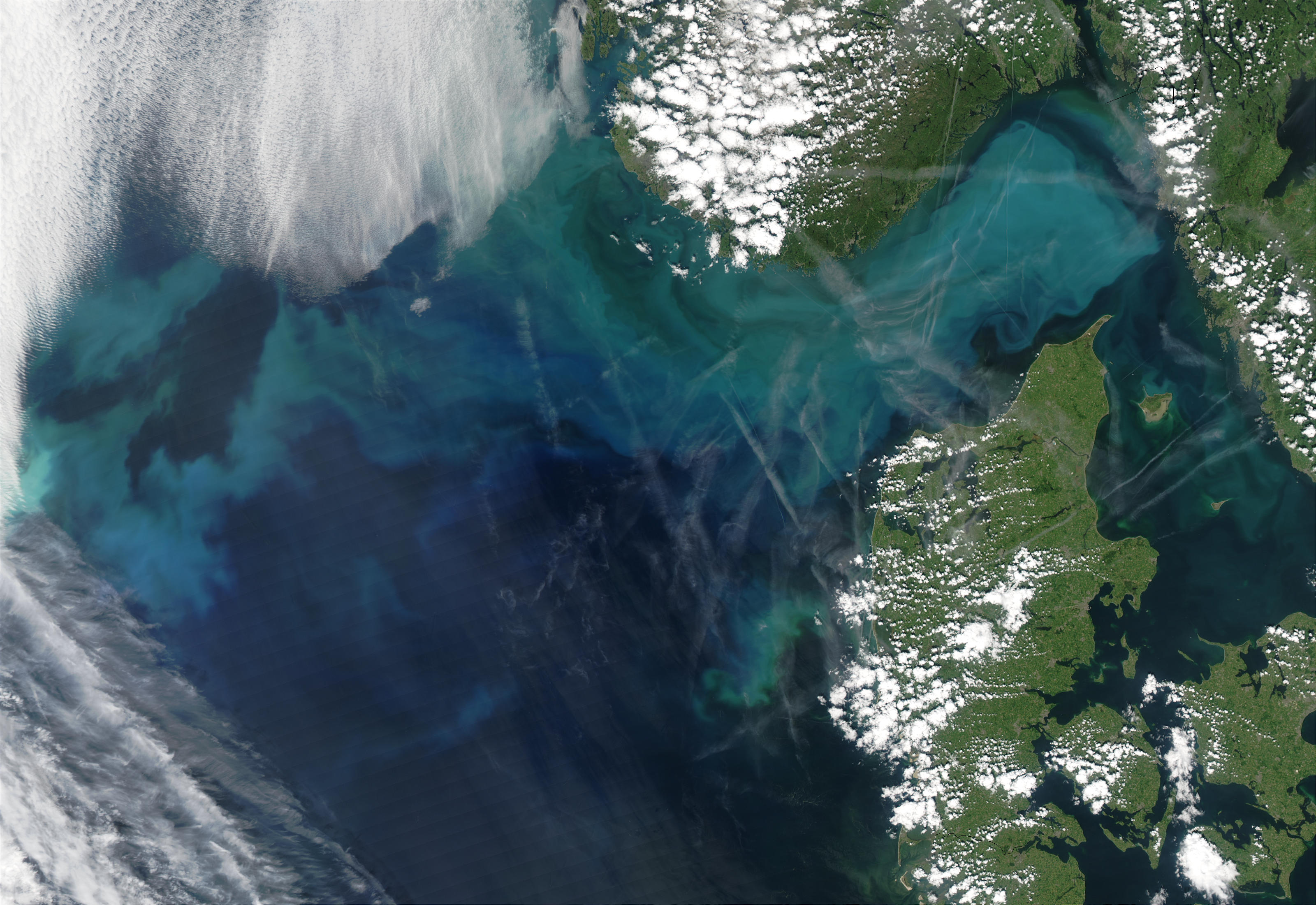 Phytoplankton bloom in the North Sea and the Skagerrak - related image preview