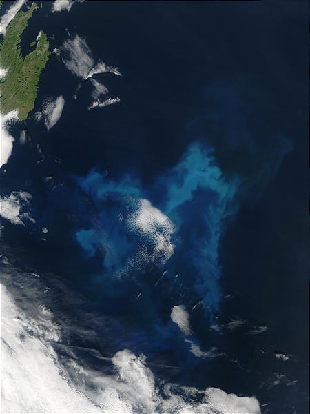 Phytoplankton bloom off Newfoundland - related image preview