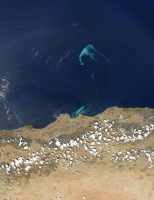 Phytoplankton bloom off Algeria - related image preview