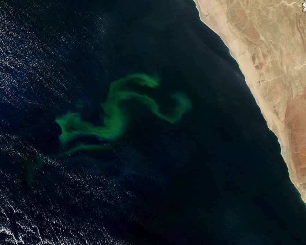 Phytoplankton bloom off Namibia - related image preview