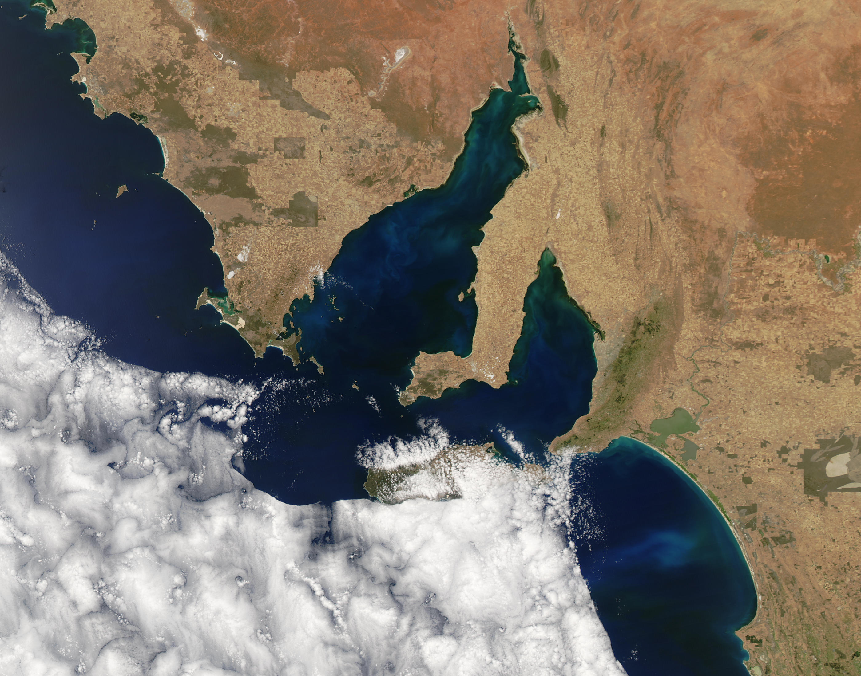Phytoplankton blooms off South Australia - related image preview