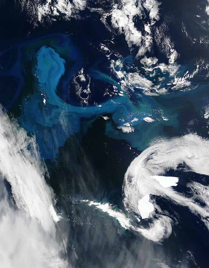 Phytoplankton bloom off South Georgia - related image preview