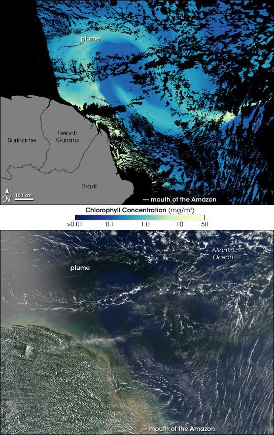 Amazon River in the Atlantic Ocean