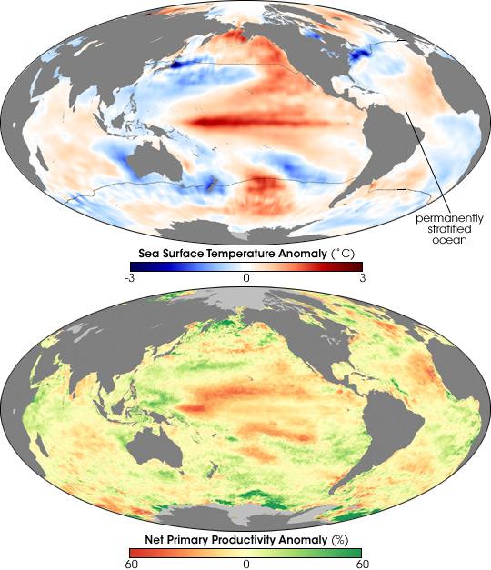 Warming Ocean Slows Phytoplankton Growth
