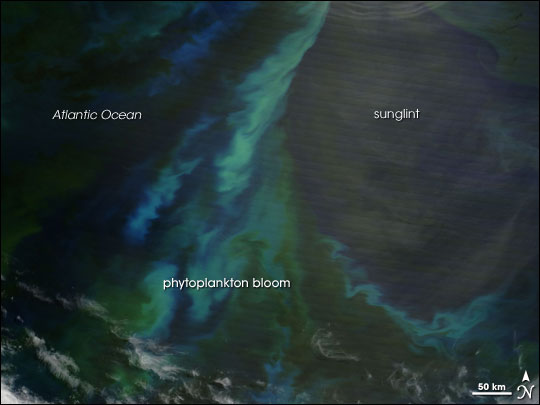 Phytoplankton Bloom off Patagonia