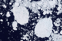 Detailed View of Arctic Sea Ice - selected image