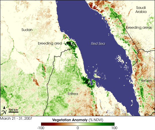 Locust Swarms Develop on the Red Sea Coast Natural Hazards
