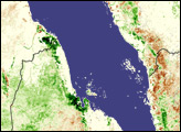 Locust Swarms Develop on the Red Sea Coast