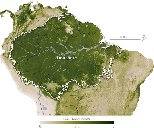 Leaf Area Index, South America