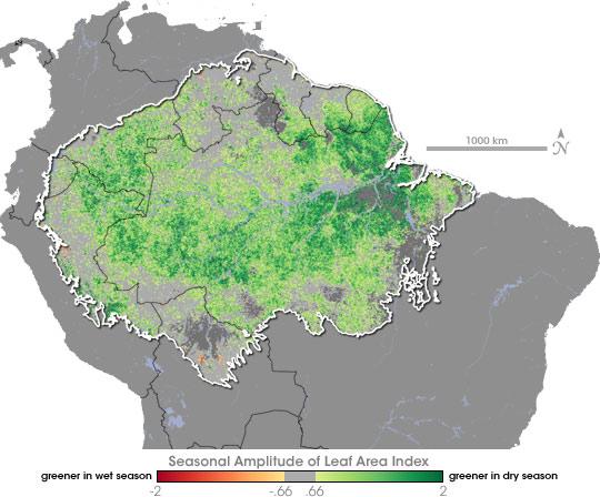 Seasonal Swings in Amazon Leaf Area