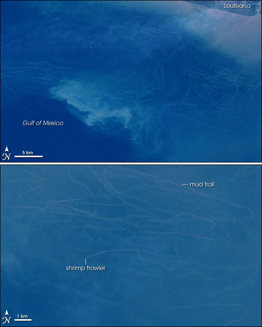 Mudtrails from Fishing Trawlers in Gulf of Mexico